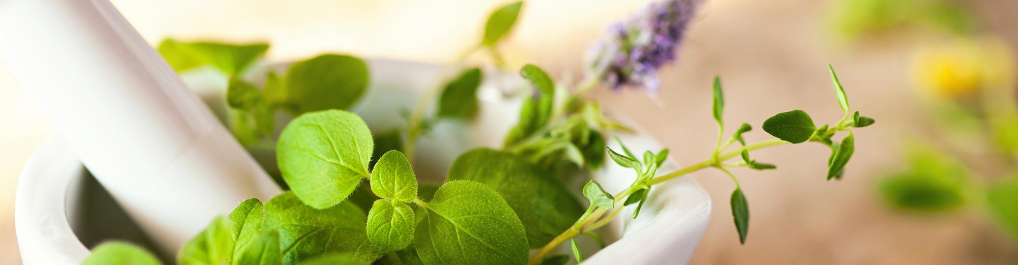 Garden, Landscape & Horticulture Index | EBSCO